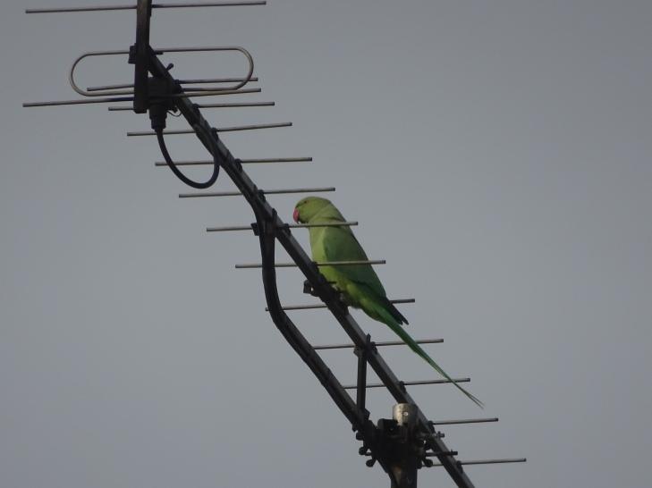 Dieses Bild hat ein leeres alt-Attribut; sein Dateiname ist dsc01682-papagei-terrasse-17.10.21.jpg.