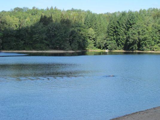 am-see-wolf-schwimmt-017