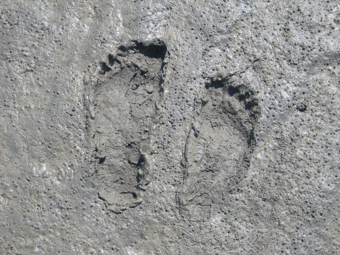 Ist Man Dann Fast Am Fuß Des Mont Saint Michel Angelangt, Wartet Noch Ein  Besonderes Abenteuer Auf Die Wanderer.