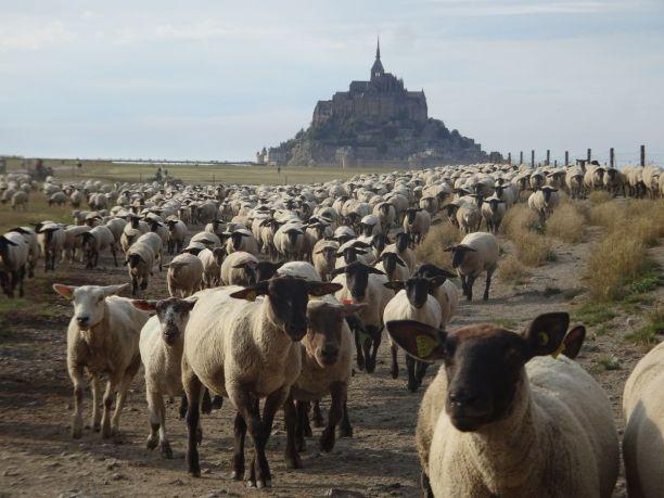 DSC08854 Mont Saint Michel (7)