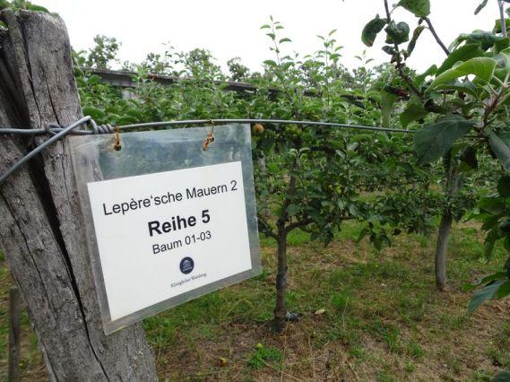 DSC05367 Lepersche Mauern Königl. Weinberg (21)