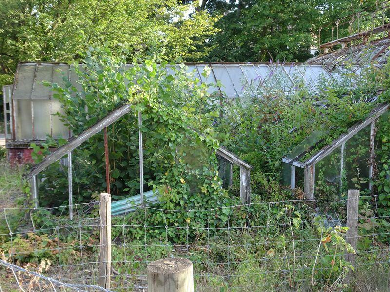 DSC08214 Jardin tropical Vincennes (90)